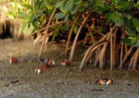 Martinique 2005 – Photo © Richard Soberka – https://www.photoway.com/
