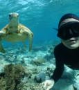 Noumea Snorkelling
