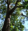 Easy tree to tree 4