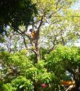 Easy tree to tree 2