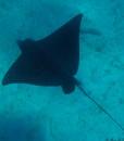 Snorkelling Noumea