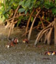 noumea mangrove discovery